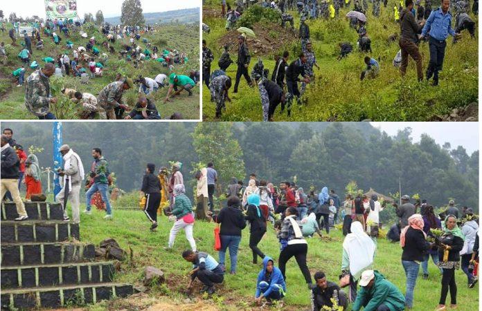 Ethiopia Oo Maalin Kaliya Beertay In Ka Badan 350 million Oo Geed