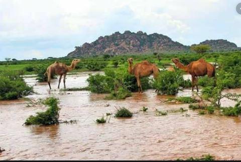 War-bixinta Roobabkii Karanta Ee Somaliland Ka Da'ay Bilihii July Illaa September, 2019